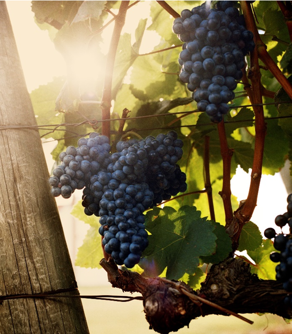 TANNAT: Home away from home